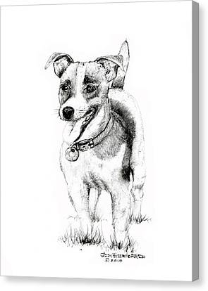 Canvas Print featuring the drawing Jack Russell Terrier by Jim Hubbard