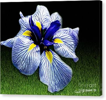 Japanese Iris Ensata - Botanical Wall Art Canvas Print