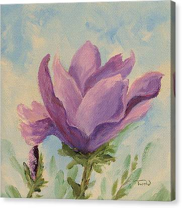 Japanese Magnolia Canvas Print by Torrie Smiley