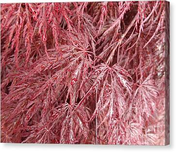 Canvas Print featuring the photograph Japanese Maple by Laurel Best