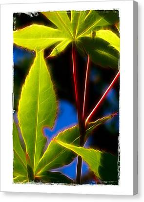 Japanese Maple Leaves Canvas Print by Judi Bagwell