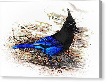 Jay On Pine Needles Canvas Print by Val Armstrong