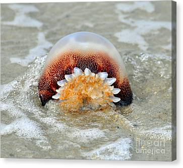 Meleagris Canvas Print - Jelly In A Jam by Al Powell Photography USA