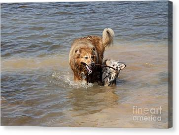 Canvas Print featuring the photograph Jesse And Gremlin Sharing by Jeannette Hunt