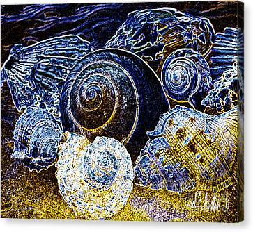 Abstract Seashell Art Canvas Print by Carol F Austin