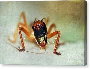 Jiminy Cricket 2 Canvas Print by Kaye Menner