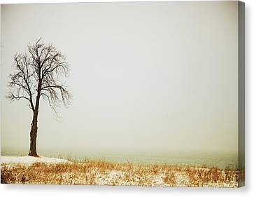 Jordan, Ontario, Canada A Tree Along Canvas Print by Pete Stec