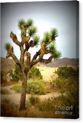 Canvas Print featuring the photograph Joshua Tree by Jim McCain