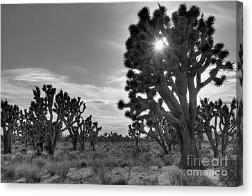 Joshua Tree National Preserve Canvas Print by Eddie Yerkish