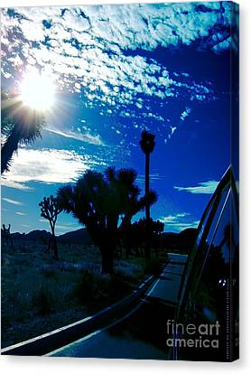 Joshua Tree Canvas Print by Tony Koehl