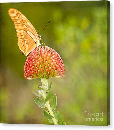 Julia Longwing Butterfly On Exotic Flower Canvas Print