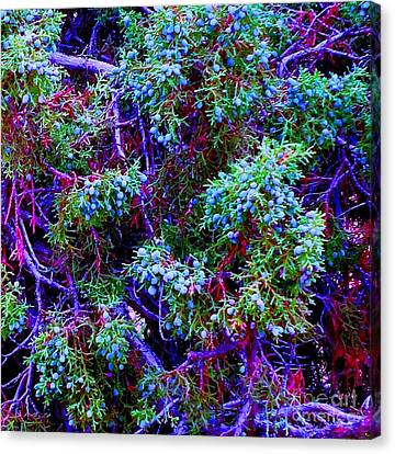 Canvas Print featuring the photograph Juniper Neurons by Ann Johndro-Collins