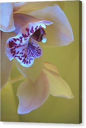 Just Being Here Canvas Print by Shirley Sirois