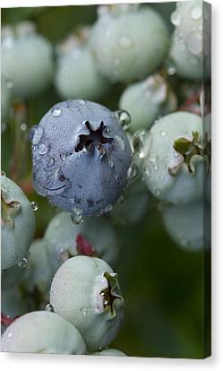 Canvas Print featuring the photograph Just Blue by Carrie Cranwill