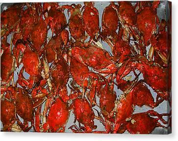 Just Crabs Canvas Print by Jim Ziemer