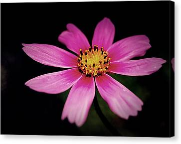 Just One Canvas Print by Steven Milner