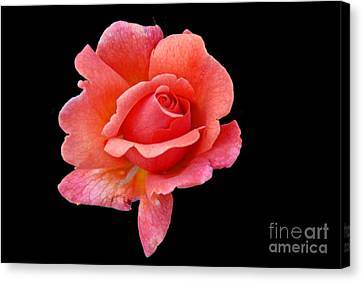 Canvas Print featuring the photograph Just Peachy by Cindy Manero