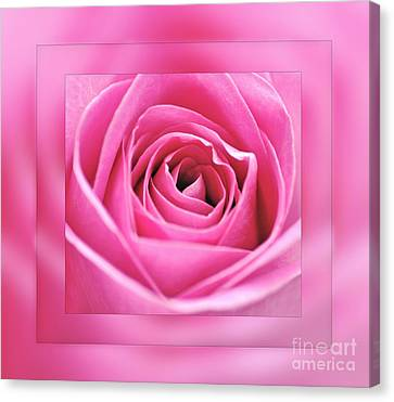 Just Pink Canvas Print by Kaye Menner