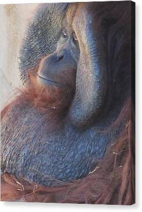 Just Thinking-2 Canvas Print by Todd Sherlock