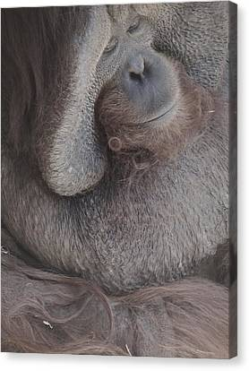 Just Thinking Canvas Print by Todd Sherlock