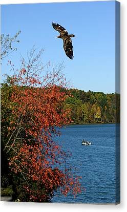 Canvas Print featuring the photograph Juvenile And Fishermen by Randall Branham