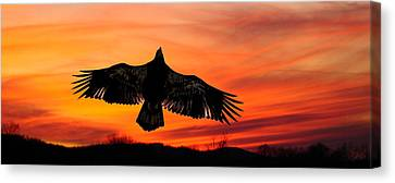 Canvas Print featuring the photograph Juvenile Sunset  by Randall Branham