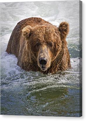 Katmai Bear Canvas Print
