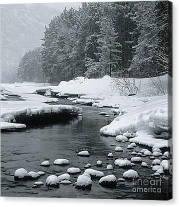 Katun River Canvas Print by Elena Filatova