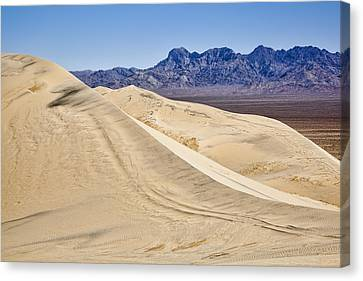 Kelso Sand Dunes Canvas Print