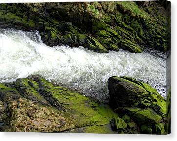 Ketchikan Creek 2 Canvas Print by Randall Weidner