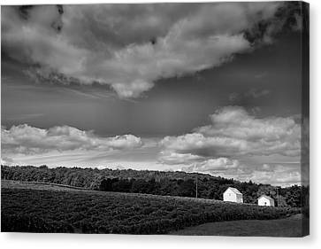 Pastoral Vineyard Canvas Print - Keuka Landscape Vi by Steven Ainsworth