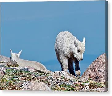 Kids On The Tundra Canvas Print by Stephen  Johnson