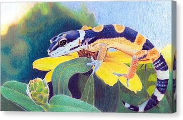 Canvas Print featuring the drawing Kiiro The Gecko by Ana Tirolese