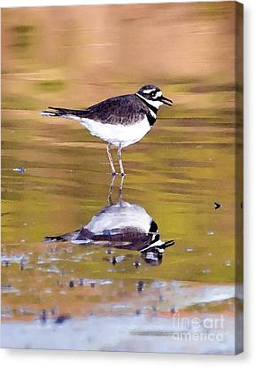 Killdeer Reflection Canvas Print by Betty LaRue
