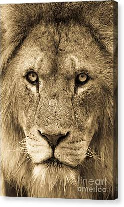 King 2 Canvas Print by Andrew  Michael