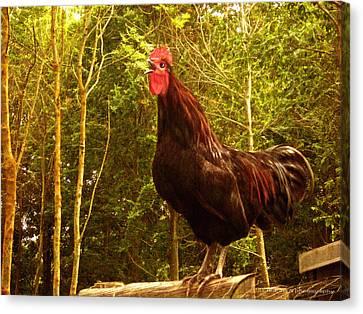 King Of The Barnyard - Rooster Canvas Print by Yvon van der Wijk