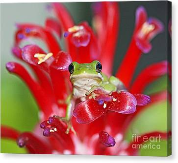 Canvas Print featuring the photograph Kiss A Prince Frog by Luana K Perez