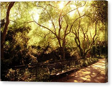 Kissed By The Sun - Central Park - New York City Canvas Print by Vivienne Gucwa
