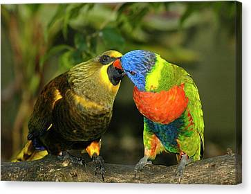 Parakeet Canvas Print - Kissing Birds by Carolyn Marshall