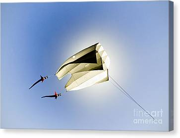 Canvas Print - Kite And The Sun by David Lade