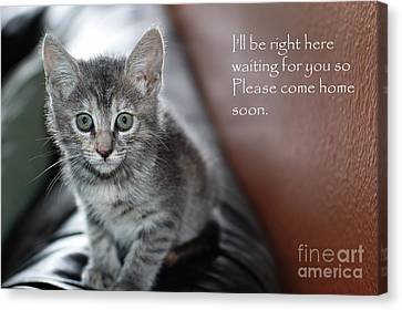 Kitten Greeting Card Canvas Print by Micah May