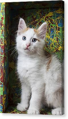 Kitten In Painted Box Canvas Print by Garry Gay