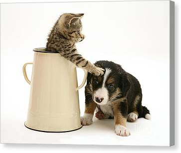 Kitten In Pot With Pup Canvas Print by Jane Burton
