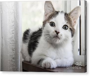 Kitten In The Window Canvas Print by Jeannette Hunt