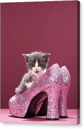 Kitten Sitting In Glitter Shoes Canvas Print by Martin Poole