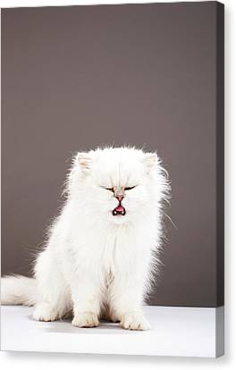 Kitten With Eyes Closed Canvas Print by Martin Poole