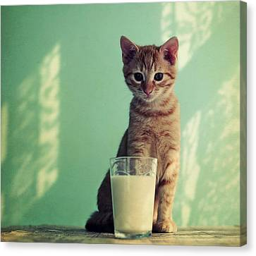 Kitten With Glass Of Milk Canvas Print by By Julie Mcinnes
