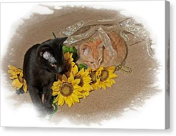 Kittens And Sunflowers Canvas Print