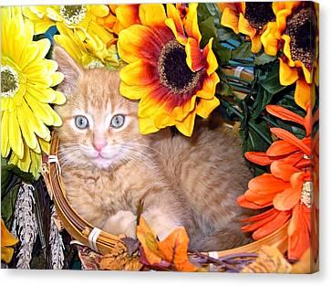 Kitten Canvas Print - Kitty Cat Lost In Thought - Cute Kitten With Blue Eyes Relaxing In A Flower Basket - Fall Season by Chantal PhotoPix