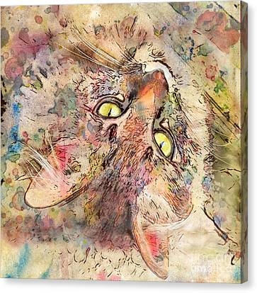 Kitty Fluffs Canvas Print by Marilyn Sholin